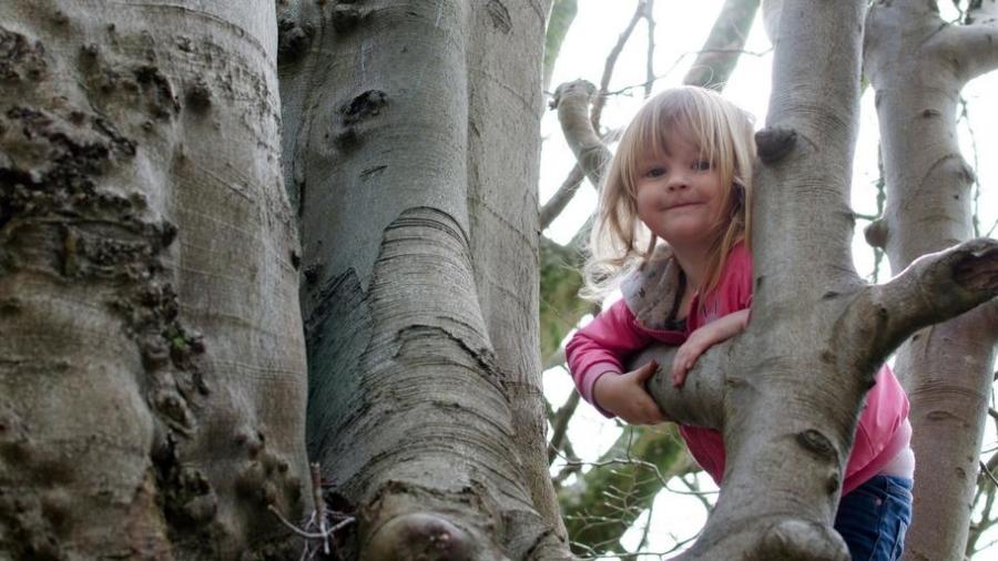 tears into smiles tree