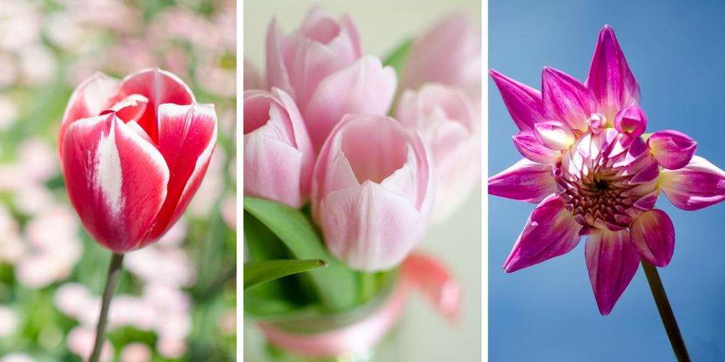 The power of flowers psychological benefits of flowers for Flowers that mean life