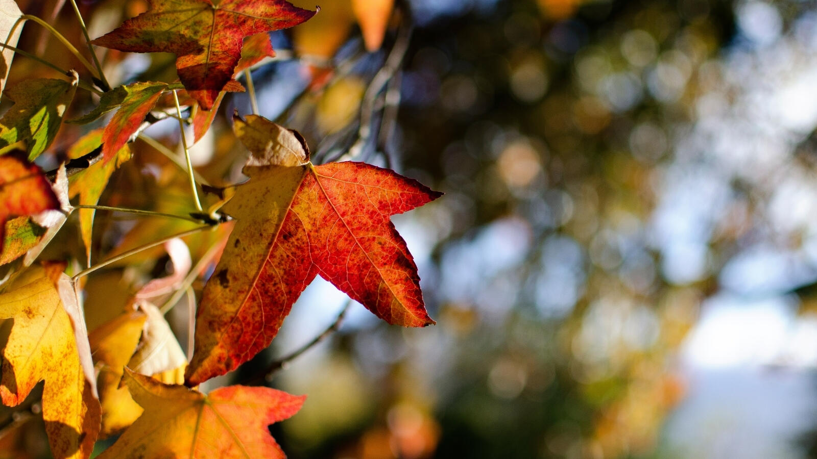 Tips for an amazing autumn photo walk