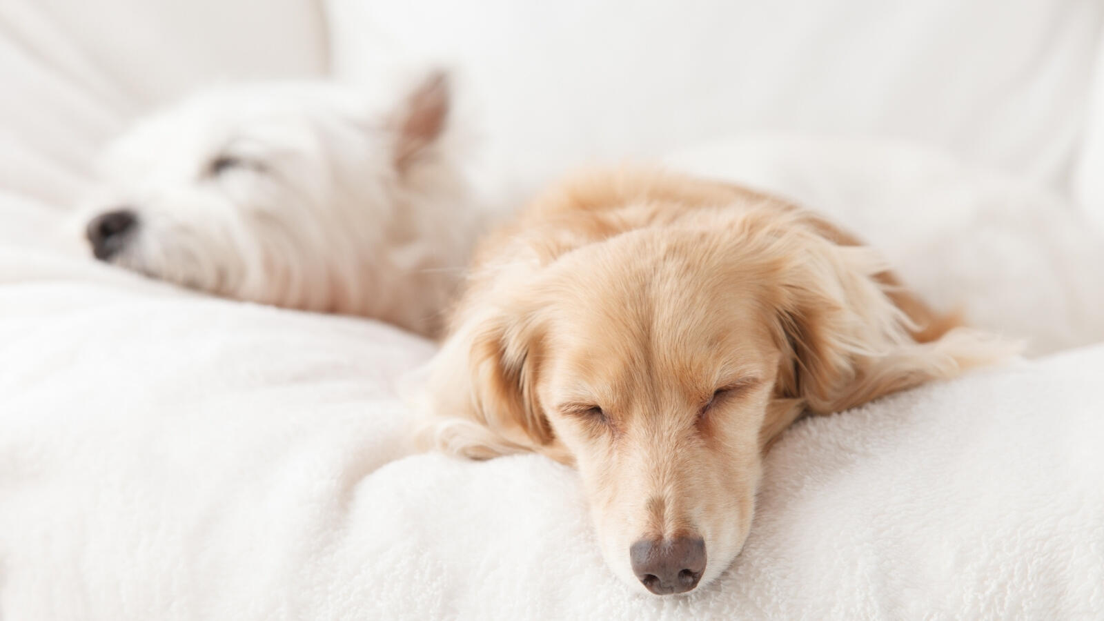 supplements you should start feeding your dog