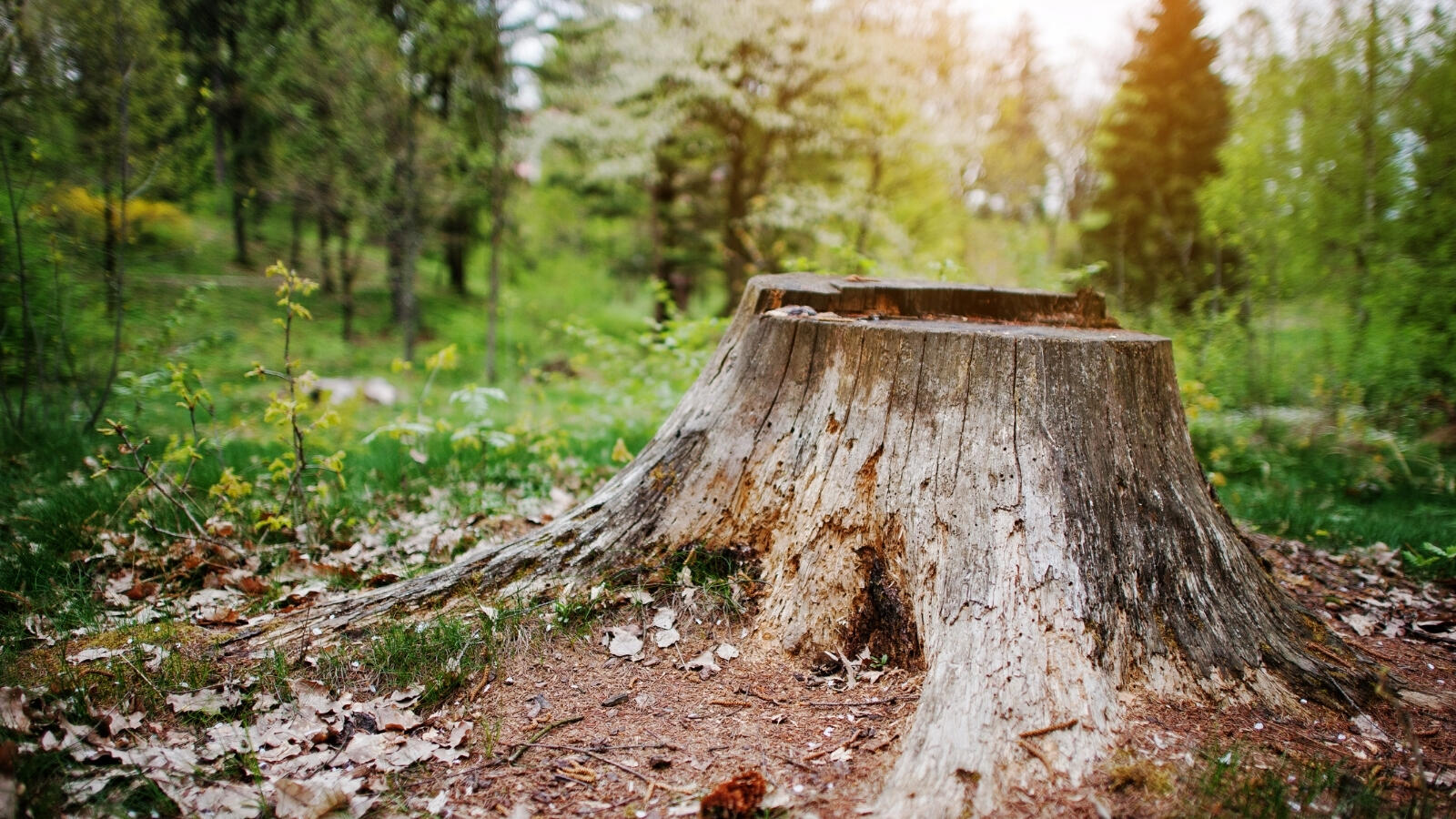 What you can do with a tree stump in your garden
